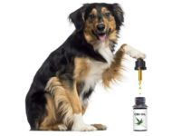 The Effects of Using CBD Oil for Pets
