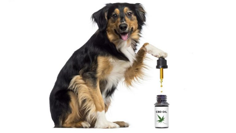 The Effects of Using CBD Oil for Pets  1