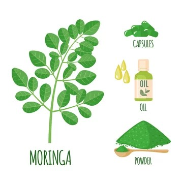 What is Moringa? And the basic health benefits