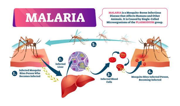 9 food and plant that naturally cure Malaria fever and Typhoid fever